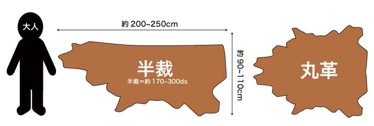革の大きさイラスト